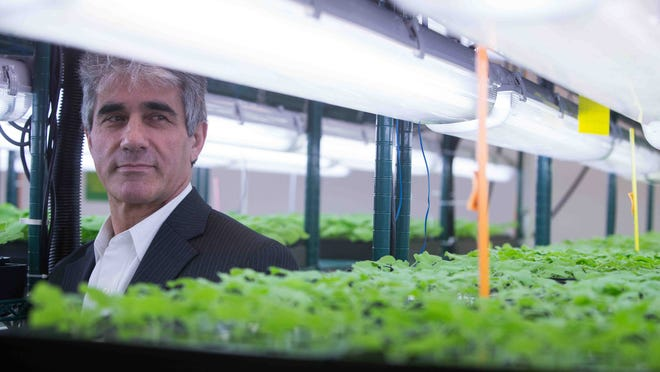 Vidadi Yusibov, executive director of Fraunhofer USA Center for Molecular Biology, is surrounded by a variety of tobacco used for the making of vaccines and therapeutics.