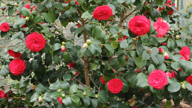 The perfect time to do any necessary pruning is once shrubs have finished blooming. The key word is necessary. Not every shrub or small tree needs to be heavily pruned every year, but most benefit from a light shaping.