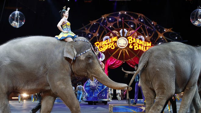 Elephants walk during a March 19 performance of the Ringling Bros. and Barnum & Bailey Circus, in Washington. Ringling Bros. held its final elephant show during a performance Sunday night in Providence, Rhode Island.