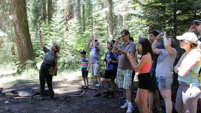 Barbara Lockwood, interpretive ranger, leads the Realm of Giants ranger hike Sunday afternoon at Sequoia National Park.