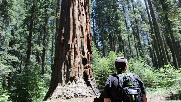 A visitor hikes Giant Forest at Sequoia National Park.