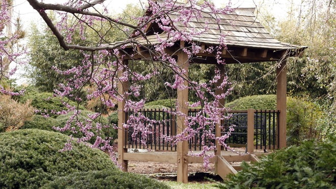 Admission to the Mizumoto Japanese Stroll Garden is free during Saturday's festival.