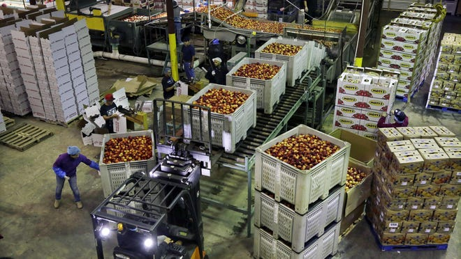 In this Aug. 27, 2013, file photo, workers load large containers of nectarines for sorting at Eastern ProPak Farmers Cooperative in Glassboro, N.J. U.S. wholesale prices fell 0.6% in February 2020, the biggest decline in five years, led by a sharp drop in energy costs. The Labor Department said the decline in its producer price index, which measures price pressures before they reach the consumer, followed a 0.5% rise in January. It was the sharpest decline since a similar 0.6% drop in January 2015.