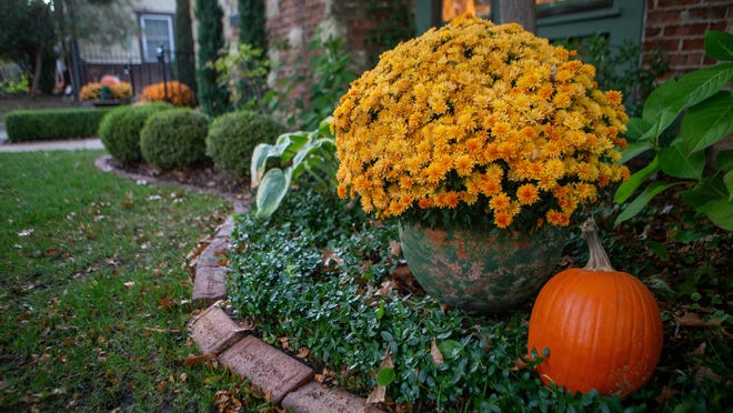 The Soldiers & Sailors Memorial Hospital Auxiliary is taking orders for beautiful fall mums. The plants come in yellow, rust, and dark red/burgundy. The price is $8per 10-inch plant.