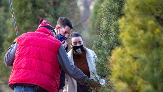 Kalynn and John Monroe inspect a live Scotch pine tree on Thursday evening at Strawberry Hill Christmas Tree Farm, with the help of Mark Walther. The couple recently married and wanted to continue Kaylnn's family tradition of having a real tree for the holidays.