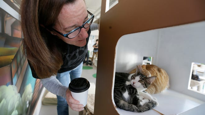 Dawn Piper moves in to take a closer look at a pair of cats in a tower at the Cat Town Cafe in Oakland, Calif.