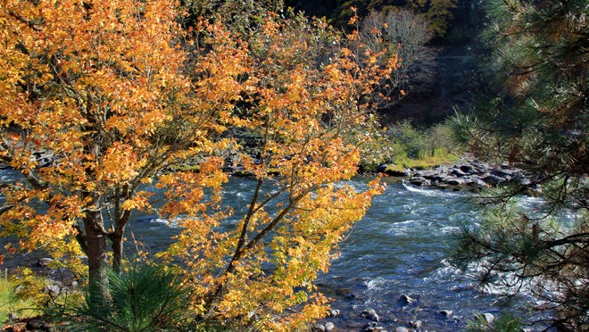 The autumn colors are bright on the Klickitat Trail in autumn. The Klickitat Trail follows the Klickitat River for much of its journey. The trail is located in the Columbia River Gorge, near the small town of Lyle, Wash.