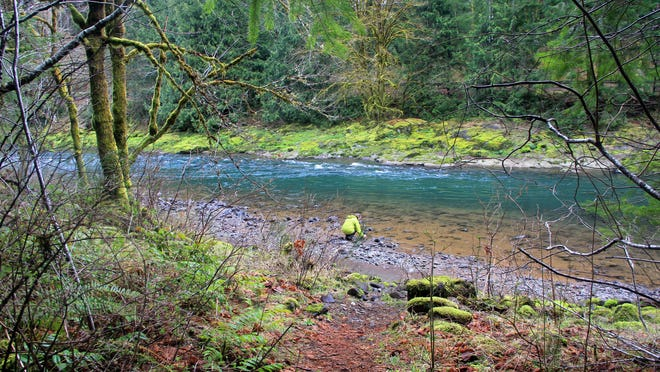 The Wilson River Trail, near the Tillamook Forest Center, has some scenic beaches along the river.
