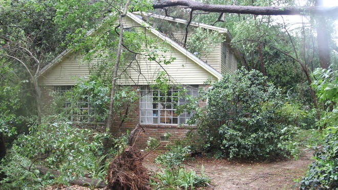 Several trees uprooted and broke at Hal and Kathy Marsh's Lakeshore Drive home, including one tree that fell onto the home's roof. The Marsh's house is near the path of a tornado that touched down in Tallahassee.