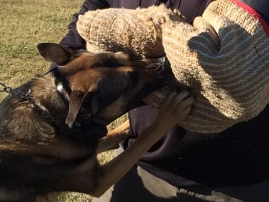 Richmond Police Department K-9 Leo demonstrates his