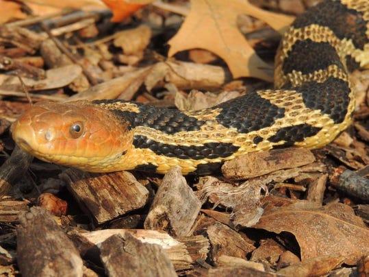 APC zimmer nature summer snakes LEAD.JPG