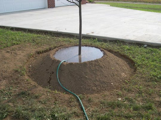 -Tree Planting Step 11 Wide.jpg_20140717.jpg