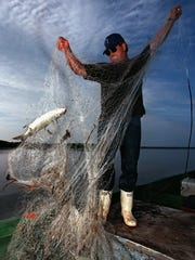 Mullet can be caught only with a net (unless you are an expert fisherman), because mullet are vegetarians.