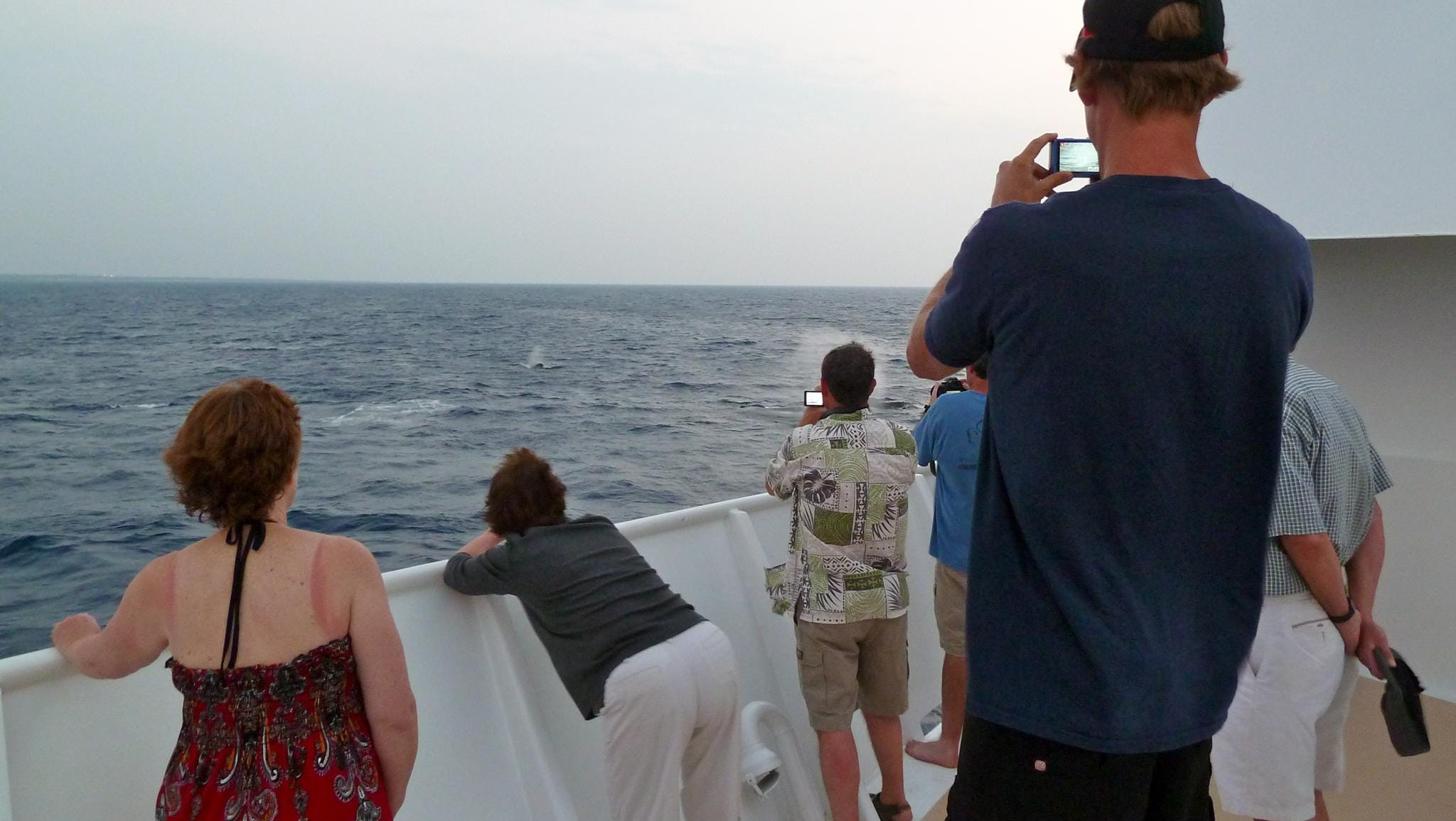 Un-Cruise ships have flexible itineraries, allowing time to veer off course to view whales and other marine life.