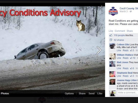Cecil County Sheriff's Office started photoshopping this cat into their weather posts with the hashtag #weatherkitty