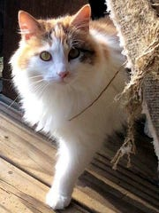 Muffy is a beautiful, 3½-year-old, spayed, female,