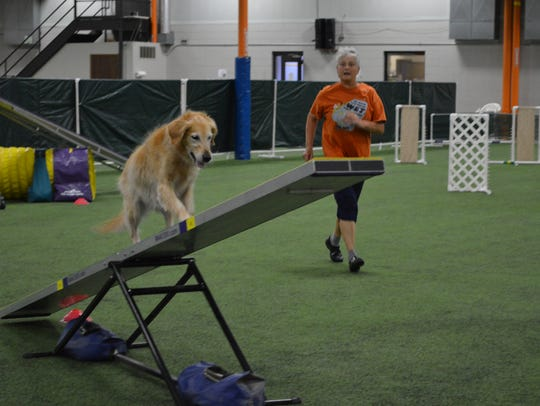 Linda Timm's golden retriever, Hollie, practices agility
