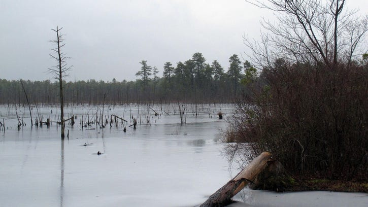 This Jan. 6, 2014 photo shows a section of the Pinelands