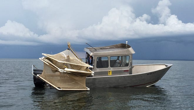 A large DNR boat pulls up a walleye holding pen during a fish hooking mortality study Tuesday, July 26, on Mille Lacs Lake.