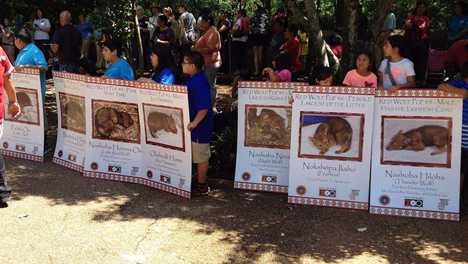 Members from the Mississippi Band of Choctaw Indians reveal the names for a litter of red wolf pups at the zoo Saturday.