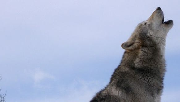 When they howl, it's music. When politicians do so,