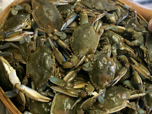 Blue claw crabs