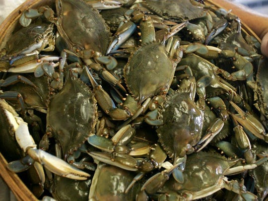 A bushel of blue claws ready to be cooked.