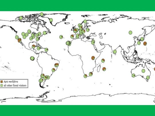 Proportion of all floral visit contributed by the western honeybee in 80 plant-pollinator interaction networks in natural habitats worldwide.
