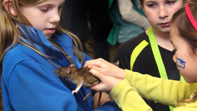 Indiana officials are trying to alert rat buyers about human infections of a rare rat virus.