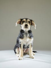 Kevin from New Life Animal Rescue in Marlton is in this year's Puppy Bowl.