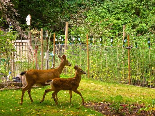 0912 Deer