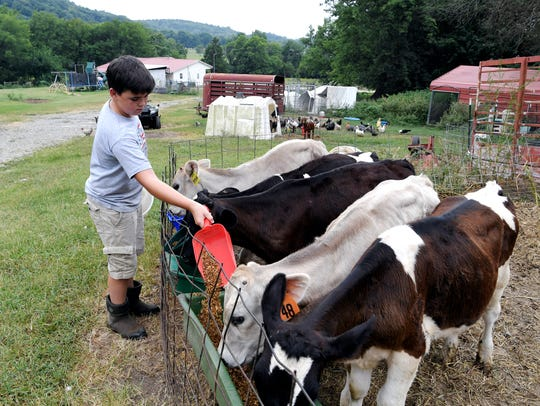 Sam Lamb, 13, feeds calves on his family's College Grove dairy farm on the morning of July 27, 2018.