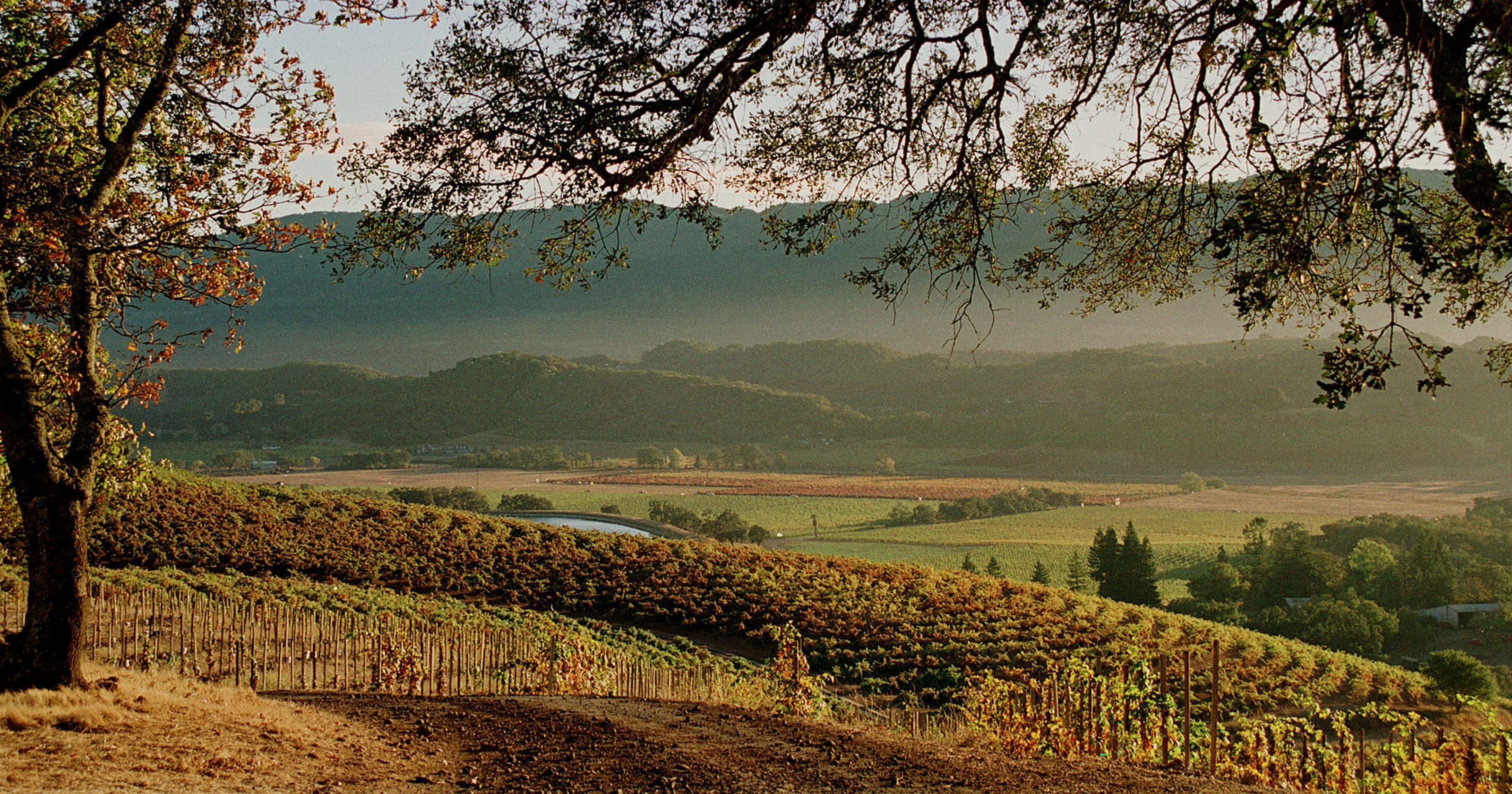 California wine country: Sonoma County