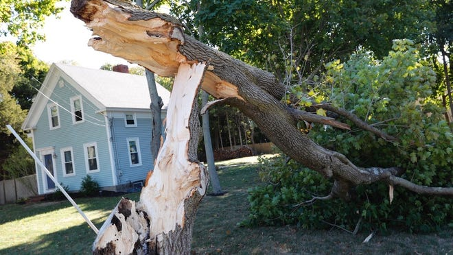 This tree on Ocean Street in Marshfield was split during an intense storm that passed through the area Wednesday evening, Oct. 7.