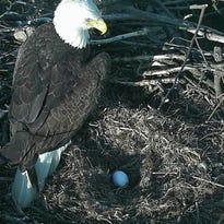 'Eagle Watch' begins: D.C. eagle lays second egg