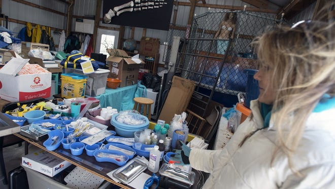 Suzanne Thurman explains the various tools and lab equipment used when processing stranded marine mammals inside the Marine Education Research and Rehabilitation Institute in Lewes.