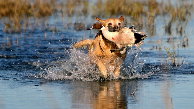 There are two Ducks Unlimited events coming soon.