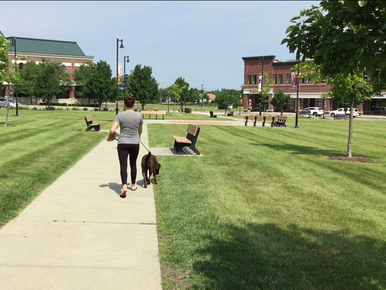 An employee at Maple Tree Place walks her dog through the commercial complex's central square on Aug. 3, 2017. Plans are underway to upgrade building facades, expand parking and add a skate/splash park.