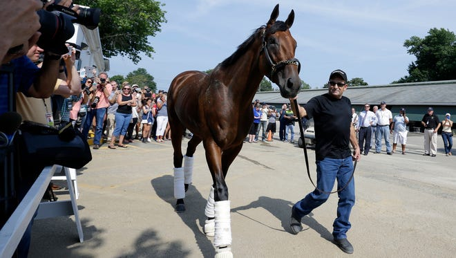 Assistant trainer Jimmy Barnes walks Triple Crown winner American Pharoah after arriving at Monmouth Park in Oceanport, N.J., Wednesday, July 29, 2015. American Pharoah is preparing for Sunday's running of the $1 million Haskell Invitational horse race. (AP Photo/Mel Evans)