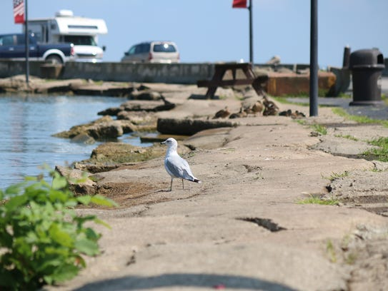A seagull spends the afternoon on the waterfront along