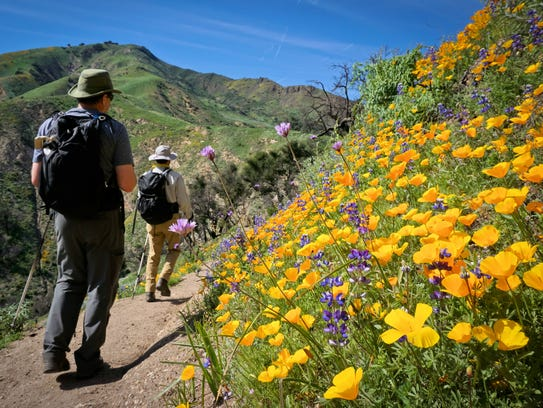 Hikers enjoy wildflowers along the Aliso Trail during the 2017 Los Padres Wilderness Basics Course in California. Studies show time alone in nature can improve a person's mental and emotional health.