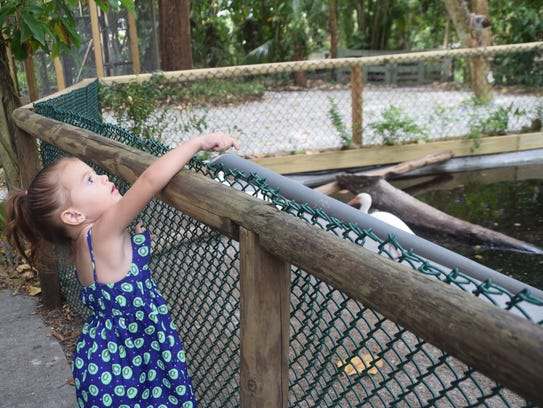 Audra Hardin, 3, feeds the turtles at the Everglades