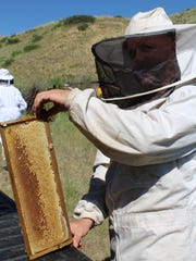 Clothed in a full bee suit, Great Falls beekeeper Brian Rogers pulls a frame from one of his hives near Highwood.
