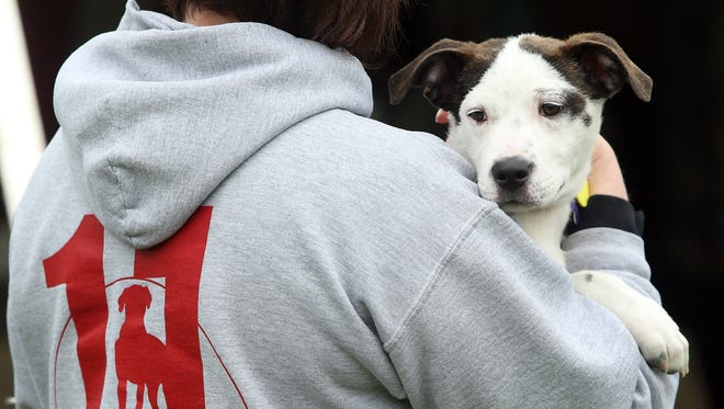 Saturday's Just Jersey Food Truck & Music Festival will benefit Eleventh Hour Rescue, a Rockaway-based animal shelter.