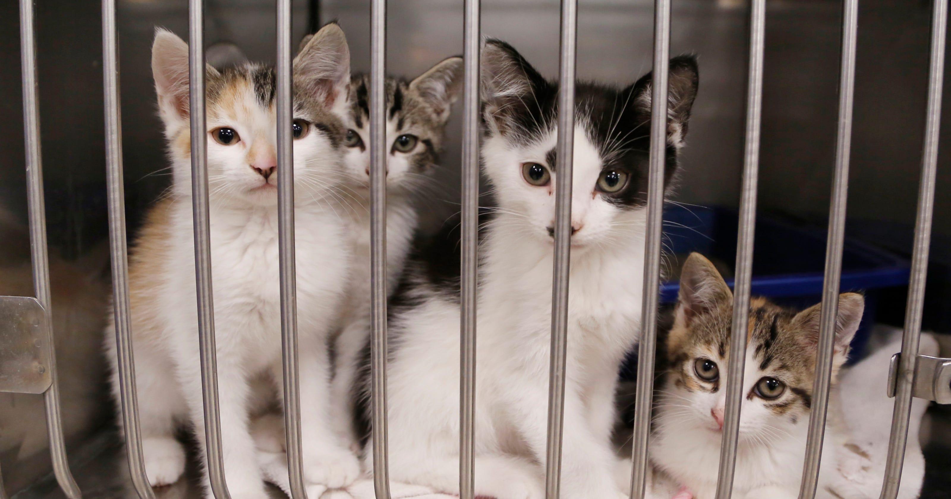 Insane Cat Population Boom Lafayette Lures Spay Neuter Clinic