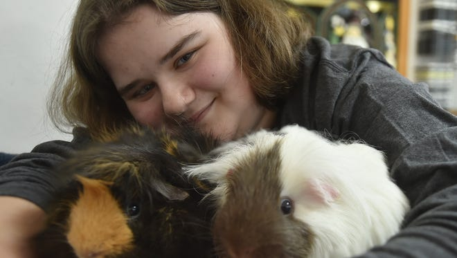 Ellen Tellstrom, 13, Sturgeon Bay, helped Safe Haven Humane Society win a minimum of a $5,000 Petco Foundation Holiday Wishes grant by submitting a story about how her adopted guinea pigs Dumpling, left, and Bunny changed her life. Tellstrom copes with a chronic health condition called Ehlers-Danlos Syndrome. Safe Have serves the Howard and Suamico areas.