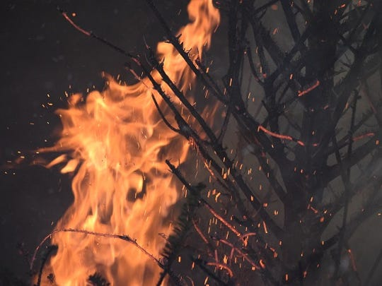 A Christmas tree is engulfed in flames during a demonstration