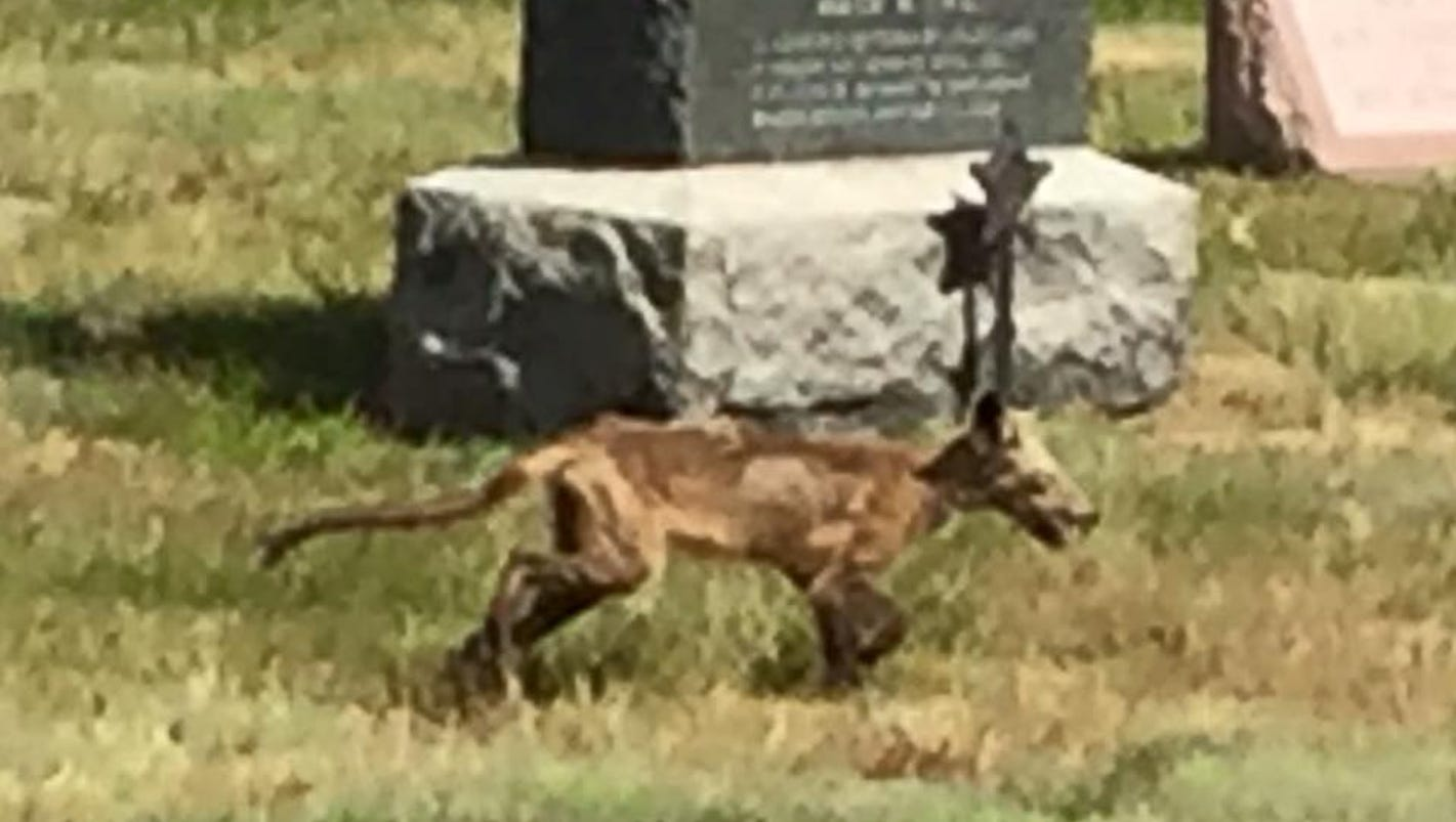 'zombie Dog' Spotted In New Hampshire Cemetery