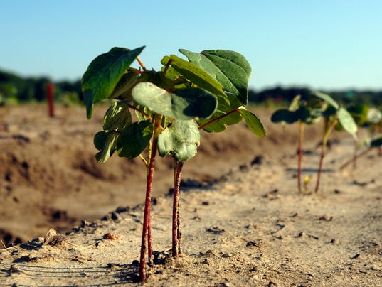 cr20140516_planting.jpg