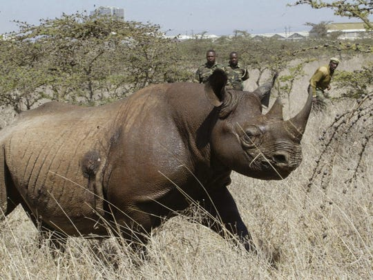 Officials in Africa say poachers target rhinos at wildlife preserves, such as this one at Nairobi National Park. Last week, a man poaching rhinos in South Africa was killed, officials say, by an elephant and his remains were eaten by lions.